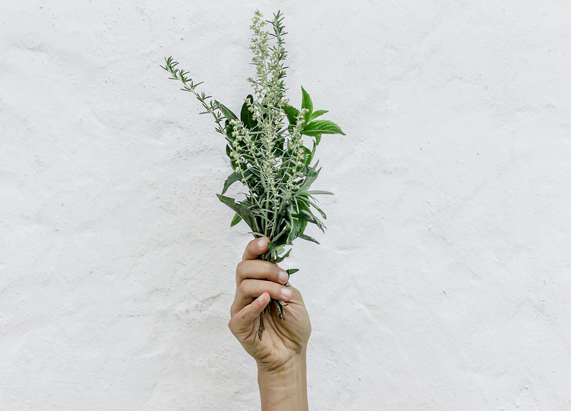 Farmacia en casa: La Salvia